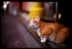 (Lefty Jordan) Tags: street leica hk film look cat hongkong day gas step m6 mitsubshi supermx100 canonltm50mmf12