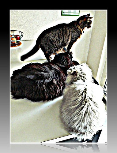 Fluffy, Nera and Tabby