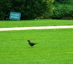 Pelouse Interdite or Keep off the Grass (Rainbow_85) Tags: paris france bird grass sign fun forbidden rodinmuseum museerodin