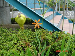 DSC07548 (evakevinemmakimo) Tags: 花 台灣 2009 花朵 台北市 dscv3 石碑 環保局 花.葉.草.樹 洲美公園