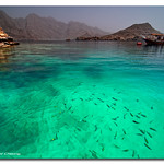 Oman Emerald