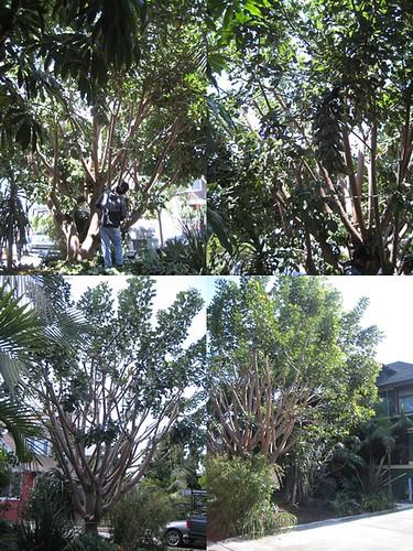 TreeTrimming-B-horz