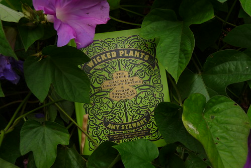 wicked plants in a wicked plant