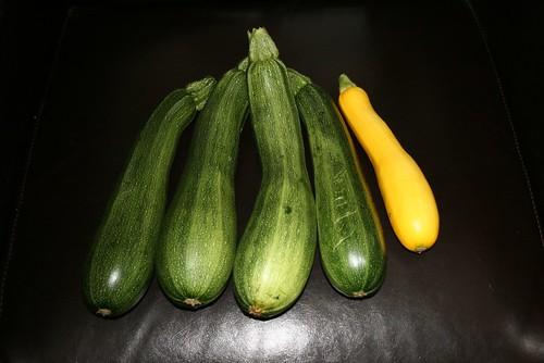 zucchini_season
