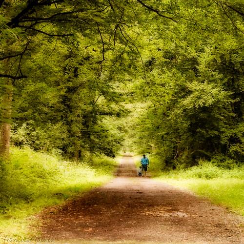 En un bosque... de la China... que digo... de Francia