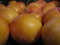 Golden plums