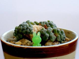 Garden Bunny Micro-Ornament