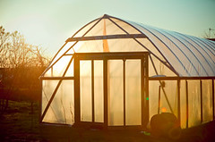 Hobby Green House Behind Sun