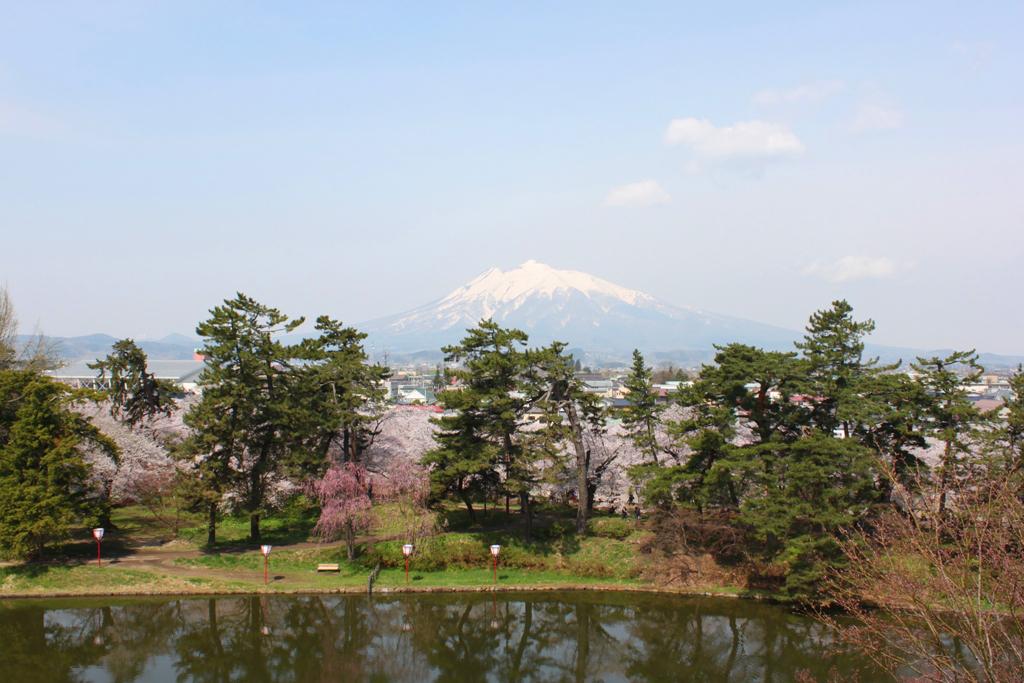 Hirosaki Park Sakura (20)