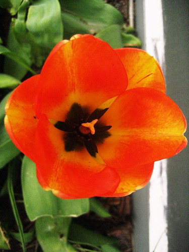 Orange (292)
