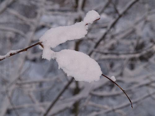 WL Winter09d