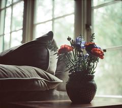 brunch flowers (Leah Reich) Tags: california flowers windows light 120 berkeley kodak bayarea brunch february expired 160vc portra 2009 yashicamat124 thanksmatt yaygermans filmfrommatt
