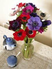 Anemones (VeronikaB) Tags: pink flowers stilllife white purple violet pot teapot bouquet anemones