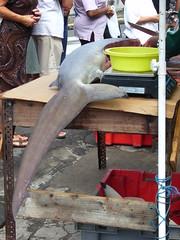 Débiter le Requin