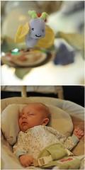 (solcookie) Tags: baby fdsflickrtoys newborn miles 4wks d700 nikond700 fisherpricepapasanswing