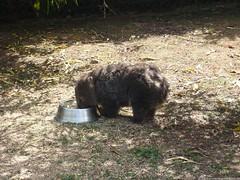 Tasmanien 78 (Eulinky) Tags: tasmania tassie tasmanien