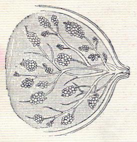 Ilustração Portugueza, No. 484, May 31 1915 - 1b