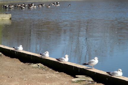 birdsinarow