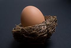 Nest Egg!