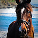 horse image, photo or clip art