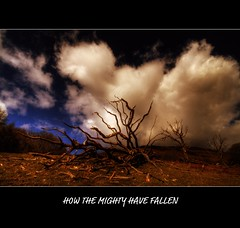 HOW THE MIGHTY HAVE FALLEN (Wiffsmiff23) Tags: mountain broken up clouds death oak decay awesome fallen barbedwire trespass huge reach rotten corpse mighty risca goldstaraward