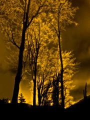 Golden mood (haikus*) Tags: trees silhouette orton proudshopper solarisazion