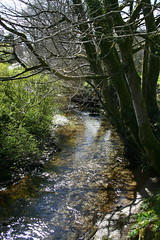 River Bray, Challacombe 2 (jurassic john) Tags: tree water river spring devon westcountry exmoor eos400d absolutelystunningscapes