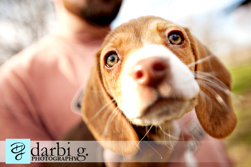 Darbi G photography-dog puppy photographer-_MG_9851-Edit