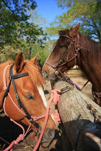 Our horses Rocky & Buddy
