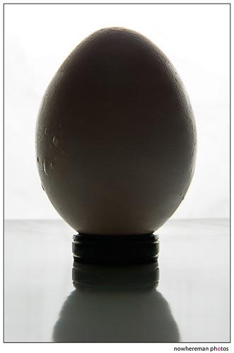 Egg, Day 5