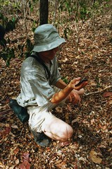 Chris is really into creepy crawlies ... (wallygrom) Tags: africa madagascar millipede chriswood millipedes giantmillipede giantafricanmillipede ankarana diegosuarez antsiranana archispirostreptusgigas chongololo ankarananationalpark