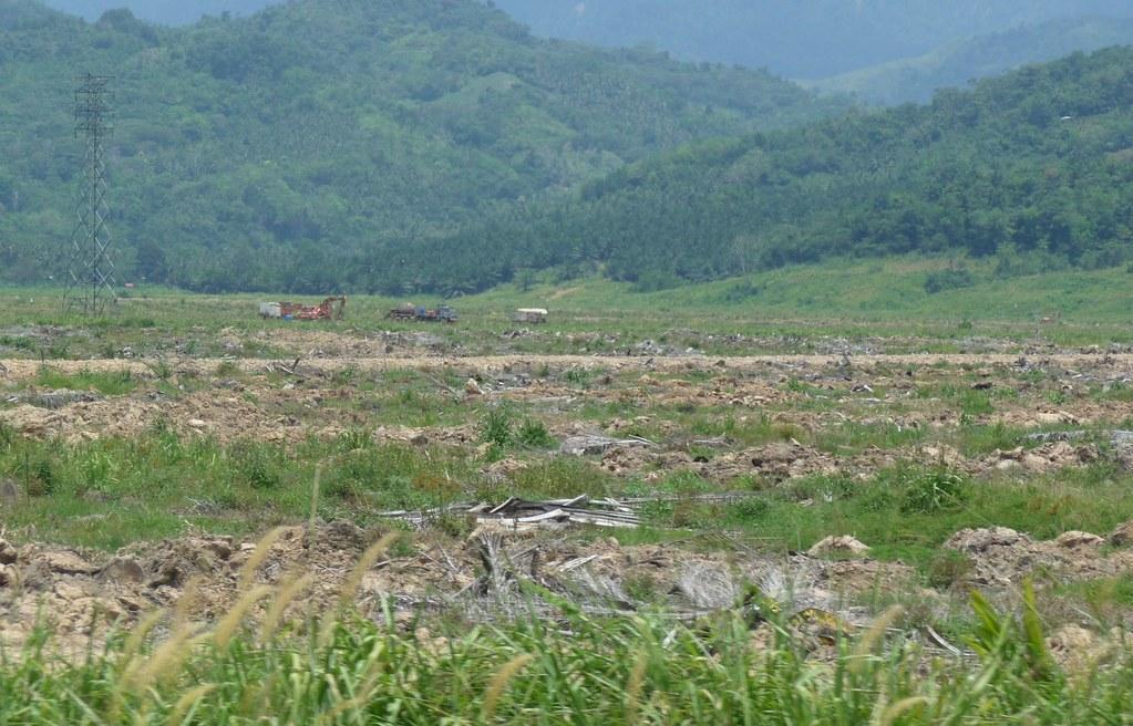 Palm Oil (1)