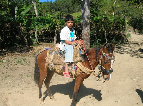 Boy in Ciénaga on a mule