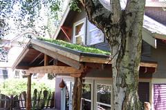 DSC_0001 (Kelley Roy) Tags: greenroof ecoroof sedums ecoroofseverywhere