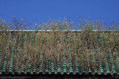 Growing In Green (MykReeve) Tags: sky plant tile weeds weed morocco tiles tiling meknes placeelhedime المملكةالمغربية المغرب مكناس geo:lat=33893631 geo:lon=5566244