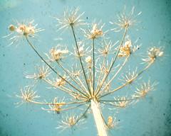 Umbrella (_cassia_) Tags: blue light brown blur flower shop umbrella vintage dry etsy dust imperfection ttv throughtheviewfinder cassiabeck cassiabeckcom