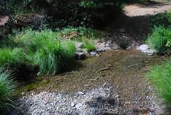Creek was flowing!