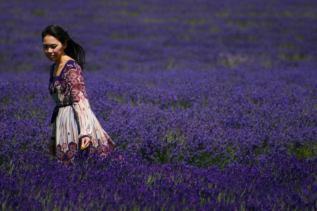 lavender19