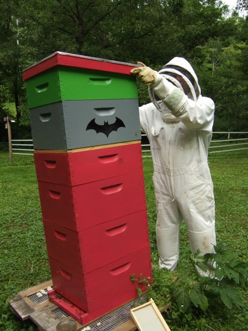 bat hive