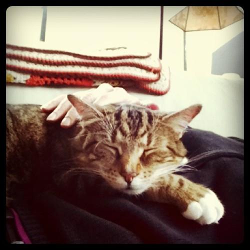 #cat nap