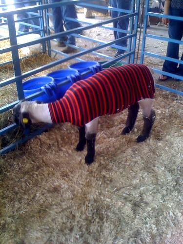 emo_sheep