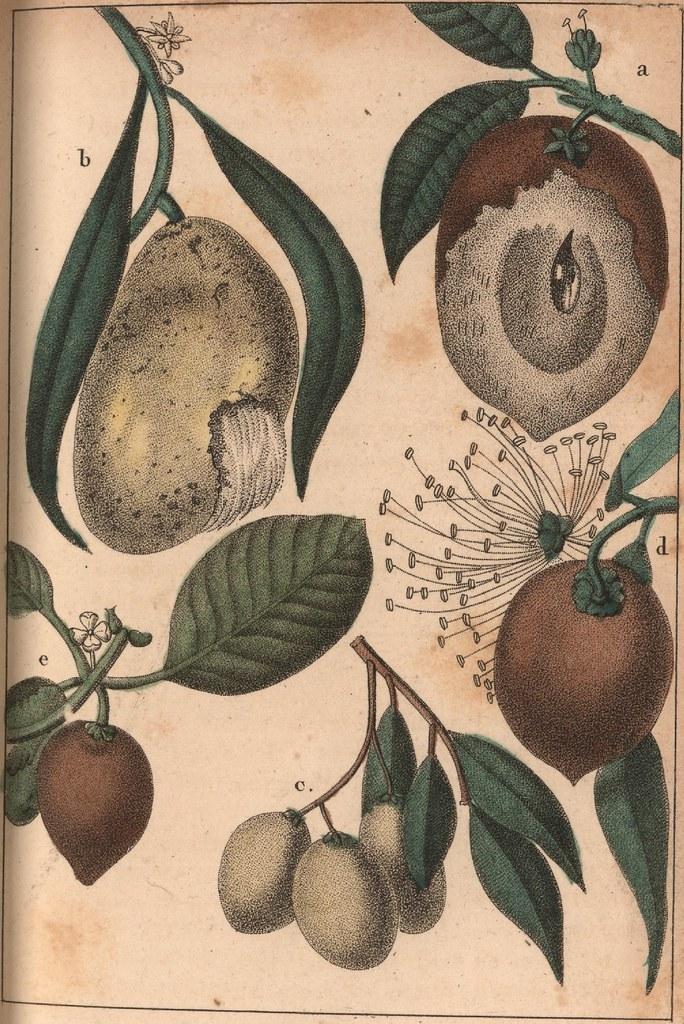 a. Sapotille. b. le Mango. c. Cirouelles. d. Pomme rose. e. Fruit du Mombin.