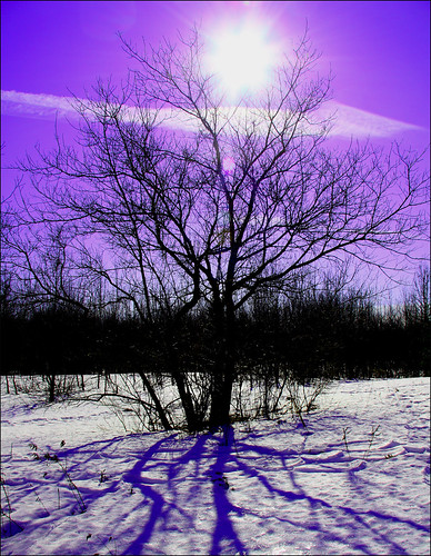 ~ Twilight Tree...  for free ~