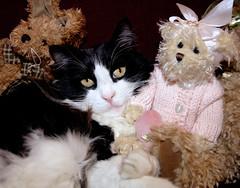Please don't interrupt my slumber (Abe K) Tags: pink sleeping animals cat cozy stuffed nikon feline slumber d2x kitty bow seater
