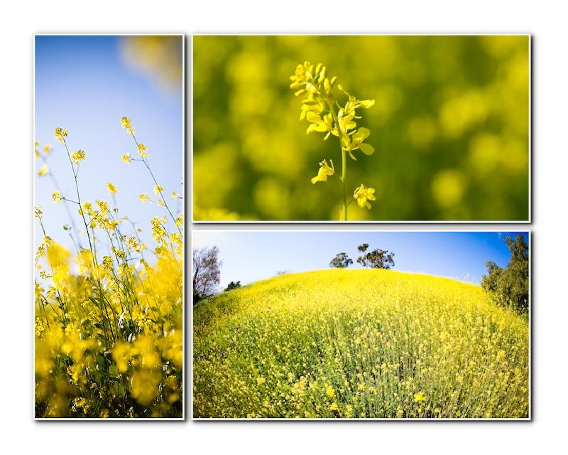 mustard-000001