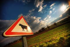 Cows crossing (The Other Martin Tenbones) Tags: road winter sunset sun france clouds canon hiking wideangle roadsign tarn hdr 14mm 5dmii