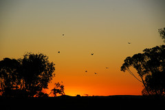 Broken Hill Sunset (itchybana) Tags:
