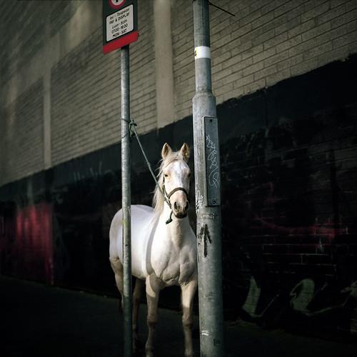cheval_dublin par vous