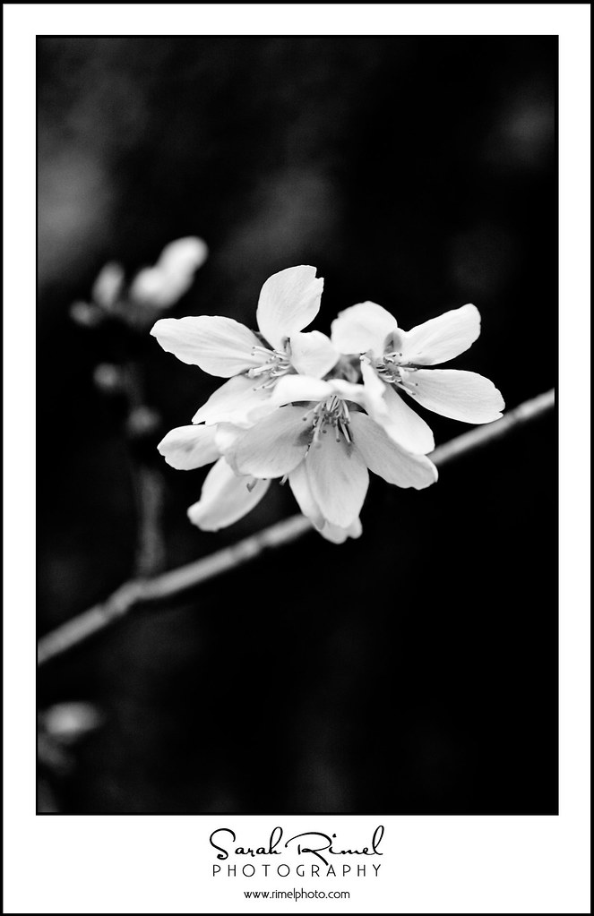 buds and blooms 09