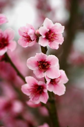 spring dream